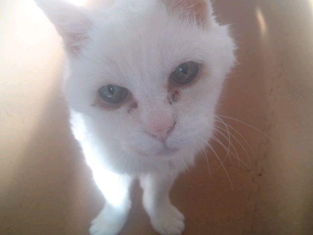 白猫の黒いトコ