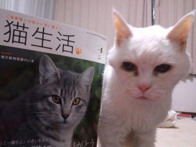 ご長寿猫に、ありがとう