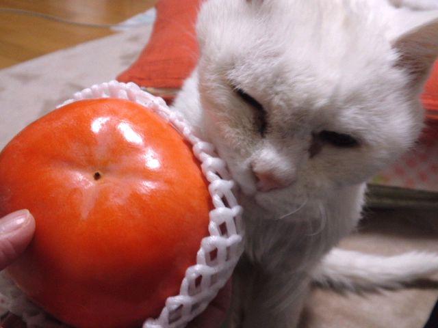 頂き物の柿